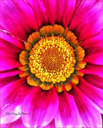 In To Sun By MaryLee Parker15 by Mary Lee Parker