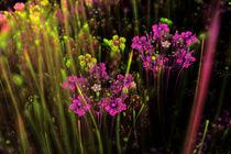 Blumenwiese II von Viktor Peschel