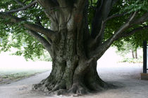 Baum 2 von Bernd Fülle