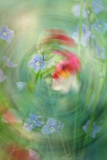 WIRBEL IM GARTEN by © Ivonne Wentzler