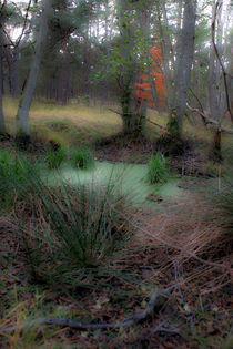 Wald 2 von Bernd Fülle
