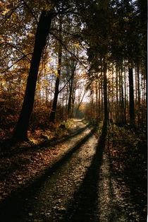 Waldweg von Bernd Fülle