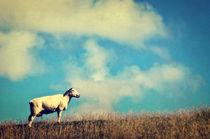 It's a sheep von AD DESIGN Photo + PhotoArt
