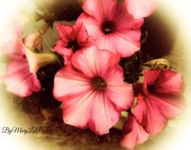 The After Glow Of Summer By MaryLeeParker15 by Mary Lee Parker