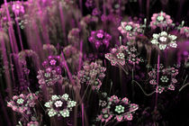 Pinke Blumenwiese von Viktor Peschel