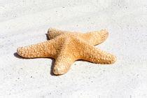 Großes Seestern - Large Sea star von Thomas Klee
