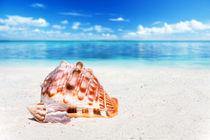 Große und kleine Muschel - Large and small seashell von Thomas Klee