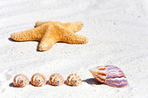 Seestern und Muscheln - Sea star and sea shells von Thomas Klee