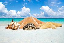 Muscheln und Seesterne - Seashells and starfishes