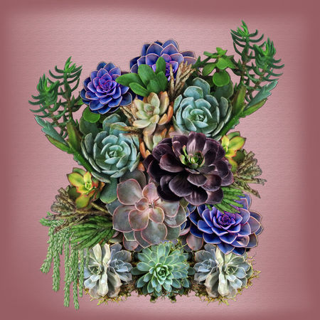 Large-succulent-display