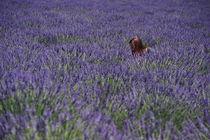 lavender girl by emanuele molinari
