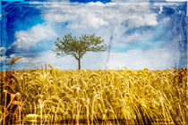 Single tree in a wheat field by David Hare