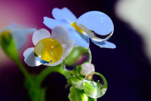 Dont-cry-flowers-dot-dot-dot