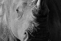Black-and-white-close-up-portrait-of-white-rhino