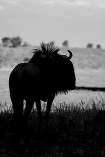 Daytime Silhouette of Wildebeest von Yolande  van Niekerk