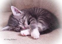 Sleepy Kitten (c)MaryLeeParker15 von Mary Lee Parker