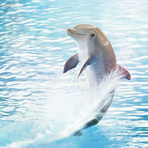 cute dolphin von photoplace