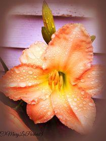 After The Rain (c) MaryLeeParker15 von Mary Lee Parker
