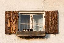 Katze im Fenster von Andre Hauschild