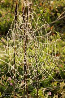 Spiderland von malin