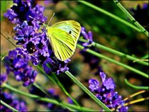~~ Lavendel & Butterfly ~~ by Sandra  Vollmann
