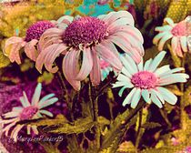 The  daisies  Are Here ByMaryLeeParker15 by Mary Lee Parker