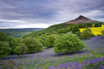 Bluebells at Roseberry Topping von Martin Williams