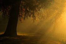 Autumn Illuminations  von chrissie Judge