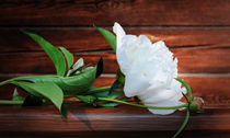 White Peony on a wooden background von larisa-koshkina
