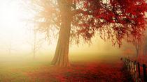 The Beautiful red Autumn tree  von chrissie Judge