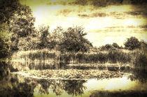 The Lily Pond Vintage by David Pyatt