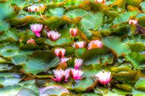 Water Lilys by David Pyatt