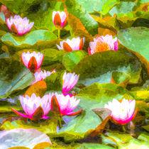 Water Lily Art by David Pyatt
