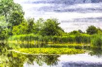 The Lily Pond Art by David Pyatt