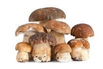 Boletus mushroom by Antonio Scarpi