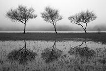 Three trees von Gaspar Avila
