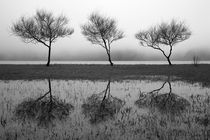 Three trees by Gaspar Avila