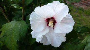 Black-bug-on-white-flower-i-curves