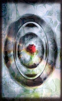 Little Rose by barbaram