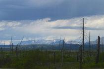 Mountain Scene in Montana von Ellen Bollinger