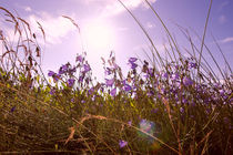 Sommerwiese by dresdner