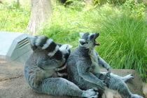 Lemurs, 2015 von Caitlin McGee