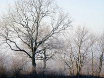 Trees von moyo