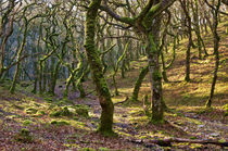 Woods near Badgeworthy Water Exmoor von Pete Hemington