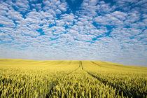 Weg in die Wolken von Andre Hauschild