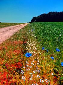 Sommerblumen am Wegesrand von Patrick Jobst