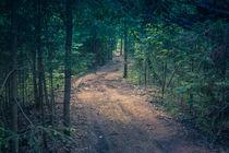 forest path von arkady