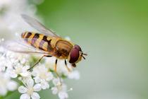 Bee on flower by Yuri Hope