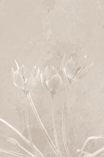 Gläsern by Bastian  Kienitz