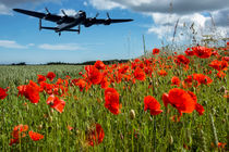Flying over poppies by Sam Smith